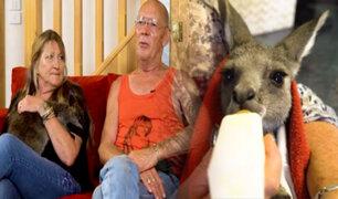 Australia: familia rescata y cuida a 17 canguros en su casa
