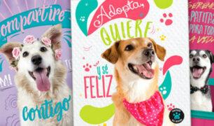 Mascotas abandonadas son la nueva imagen de conocida marca de cuadernos