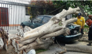 Magdalena: árbol cae sobre auto