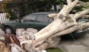 Magdalena: vecinos alertaron a municipio sobre mal estado de árbol