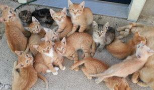 Rescatan gatitos del Parque Universitario y los llevan a albergue