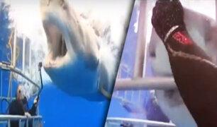 México: buzo acaricia a un enorme y hambriento tiburón