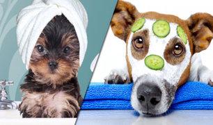 Argentina: cuidados especiales y exclusivos para perros