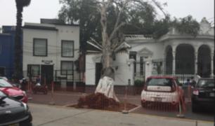 Centenario árbol cae sobre centro cultural en Barranco