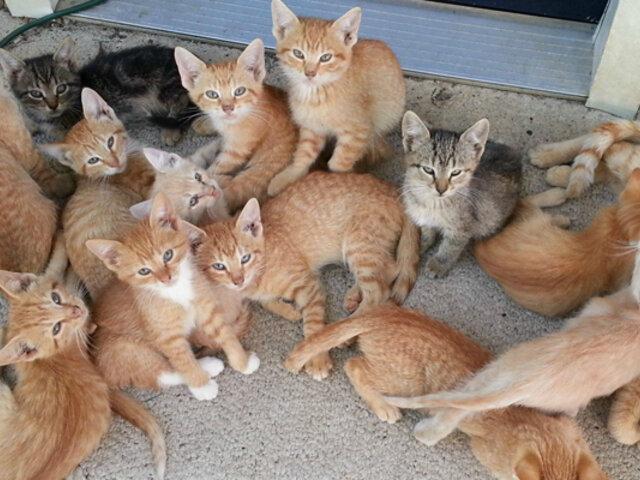 Chipre: crean santuario para gatos callejeros