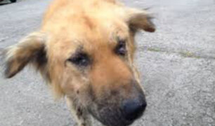 Chimbote: violento sujeto apuñaló a perro en la calle