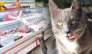 Turquía: gato en carnicería elige con maullidos que filete quiere comer