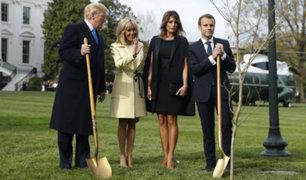 EEUU: desaparece árbol que Trump y Macron plantaron en la Casa Blanca