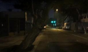 San Isidro: vecinos en riesgo por un árbol a punto de caer