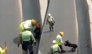 Puente Piedra: policías detiene tránsito en la Panamericana Norte para rescatar a perro