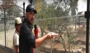 El 'Chino' Toguchi alimentó a las fieras del zoológico de Huachipa