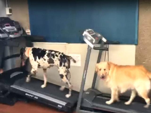 Surco: conoce el primer centro de psicología canina en el Perú