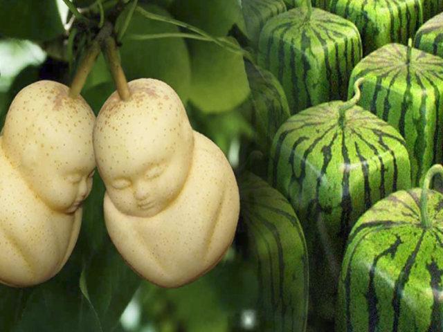 Arte comestible: frutas y vegetales con peculiares formas