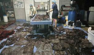 Tailandia: encuentran 80 bolsas de plástico en una ballena