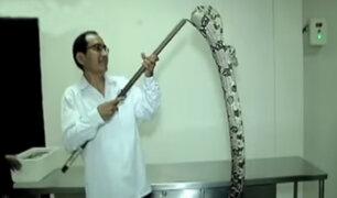 Museo Serpentario del INS exhibe las clases de víboras más venenosas del país