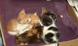 Comas: desalojan a animalista que vivía con 30 gatos