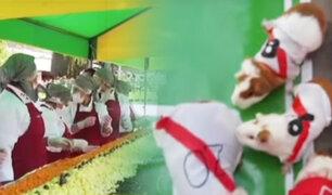 "Huancayo : cuyes futbolistas juegan ""pichanguita"" mundialista"