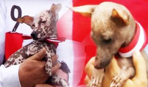 En el día del perro peruano, ellos también alientan a la Bicolor