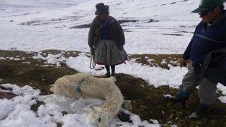 Heladas en Cusco dejan hasta el momento 5 muertos