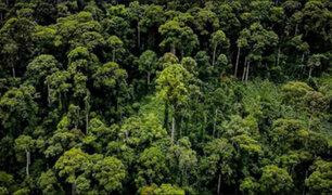 ¡Alerta! Anualmente perdemos el tamaño de un país en bosques vírgenes