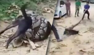 Tailandia: rescatan a perro que estaba a punto de morir estrangulado por boa