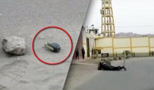 San juan de Lurigancho: dejan granada en frontis de sede judicial