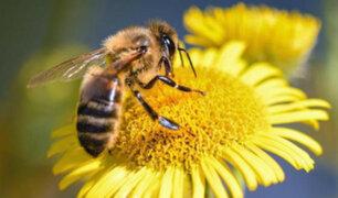 Calentamiento global podría contribuir a extinción de las abejas