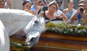 Brasil: caballo llora la muerte de su jinete y amigo en funeral