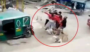 SMP: vecinos denuncian a sujeto por agredirlos y matar a una mascota