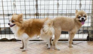 ¿Se debe separar a los perros que quedan 'pegados' cuando se aparean?