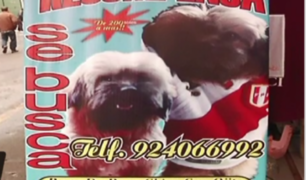 La Victoria: usan a niños para robar perros en Gamarra