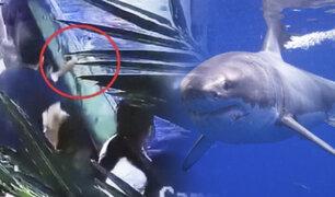 China: tiburón muerde la mano de niña de 6 años en acuario