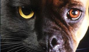 Conozca la importancia de la protección espiritual de las mascotas