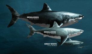 Conozca al Megalodón, el tiburón gigante que habitó las costas peruanas