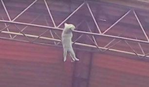 Militares salvan a gato que colgaba en techo