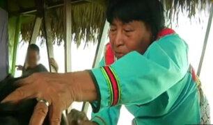 Pucallpa: conozca la primera escuela de niños chamanes del Perú