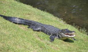 EE.UU: mujer falleció tras defender a su mascota de ataque de cocodrilo