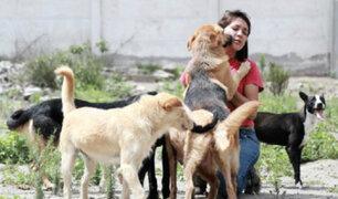 Reino Unido: prohíben la venta de perros y gatos menores de 8 meses