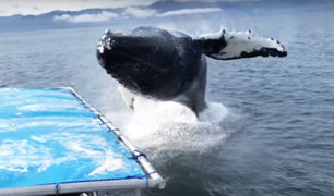 EEUU: enorme ballena aterroriza a turistas en Alaska