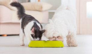 Descubre cómo alimentar de forma nutritiva a tus perros y gatos