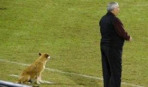 ¿Cómo esta perrita se convirtió en la 'asistente' técnica de un club paraguayo? [FOTOS]