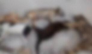 Chorrillos: vecinos preocupados luego que desconocidos envenenaran a nueve perros