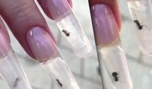 Hormigas encerradas dentro de uñas: extraña moda de manicure genera indignación