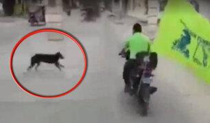 Tumbes candidato municipal atropella a perro mientras realizaba campaña