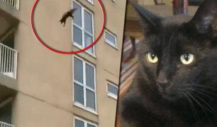 ¿Gato volador?: felino sale ileso tras caer de un sexto piso