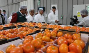 Perú exportará mandarinas a Japón luego de 10 años de gestiones