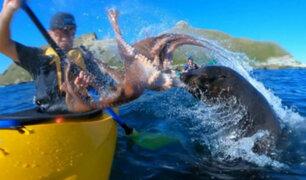 Instagram: Un lobo marino 'cachetea' a turista con un pulpo y se hace viral [VIDEO]