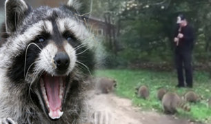 EEUU: un joven de Nueva York atrae del bosque a mapaches con su flauta