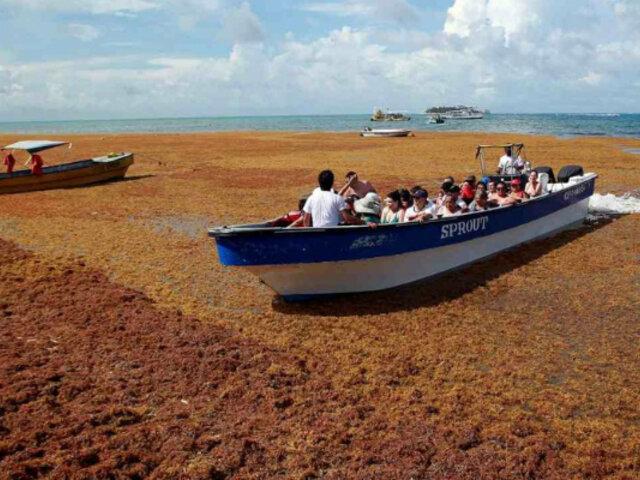 México: preocupación por algas que infestan playas caribeñas