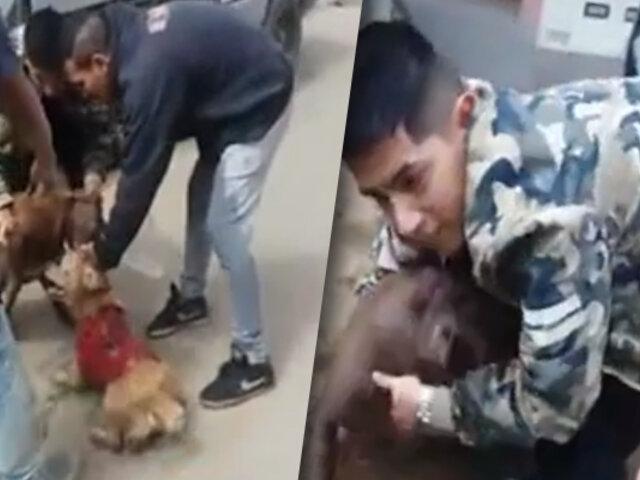 """San Juan de Miraflores: perro pitbull siembra terror en vecinos del sector """"Buenos Milagros"""""""